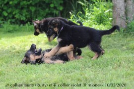 Rusty et R'mione