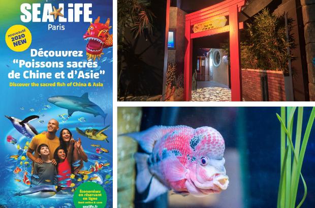Serris : Nouvel an chinois, SEA LIFE Val d'Europe a inauguré une zone dédiée aux poissons d'Asie.