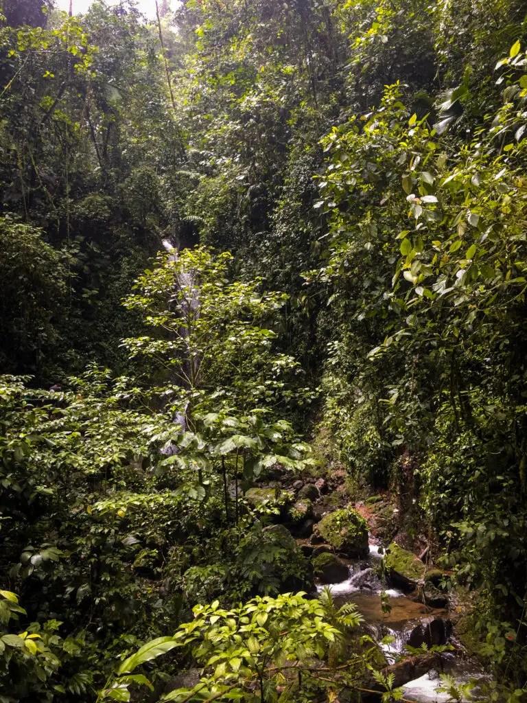 Travel Colibri Costa Rica
