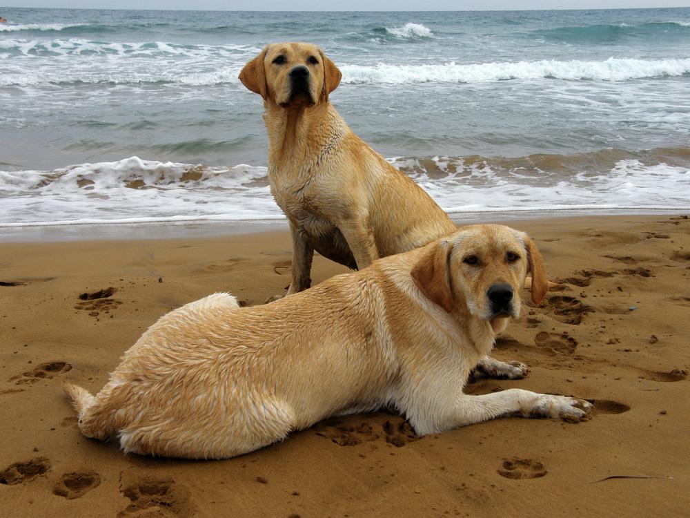 cans-praia