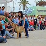 La Valencia Solidaria: 8º DESFILE SOLIDARIO A.U.P.A en Bioparc: 22 de mayo