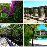 El Jardín de L´Albarda: un vergel en Pedreguer