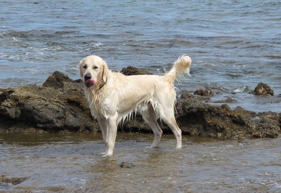 Playas para perros en 2018 en la Comunidad Valenciana