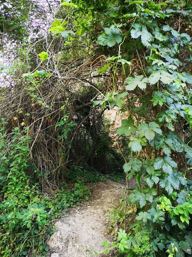 Uno de los obstáculos naturales antes de llegar al Toll Blau