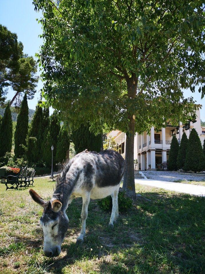 Hotel con encanto Masía La Mota, Alcoy