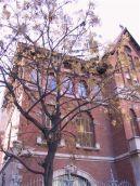 Baum golden