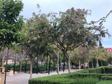 Parque Oeste_Valencia 26