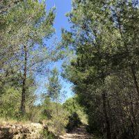 Natur Pur - Castellón