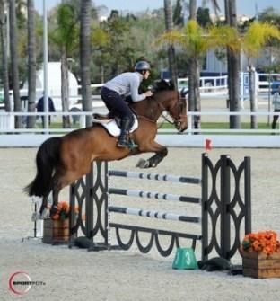 La competición para caballos jóvenes continuará hoy por la mañana.