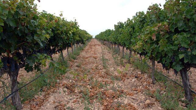 encabezan-variedad-ecologicos-Comunitat-Valenciana_EDIIMA20170608_0070_23