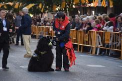 bendición de la fiesta de san Antonio Abad en València 20200117_094858 (77)