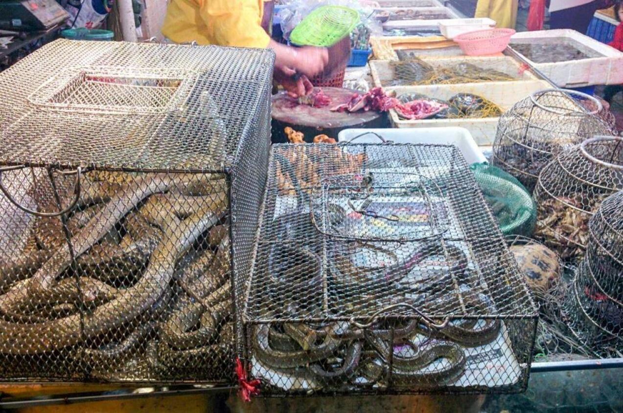 El-trafico-ilegal-de-animales-salvajes-una-bomba-sanitaria-que-ha-estallado-con-el-coronavirus