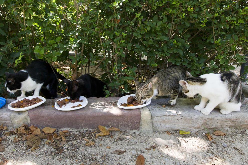 0512 Pinso colònies felines (1)