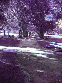 Park In purple