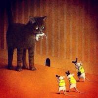 Movie Meow: Cinema Cats