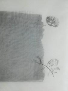valentina-semprini-monoprint (82)