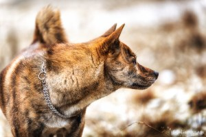Shooting grossesse alternatif sauvage loup