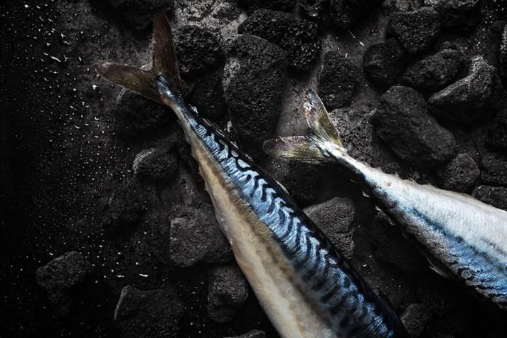 fishstilllife