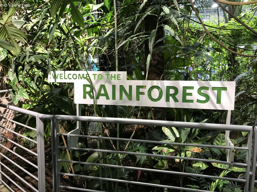 Visitare l' Accademia della Scienza a San Francisco in California rainforest
