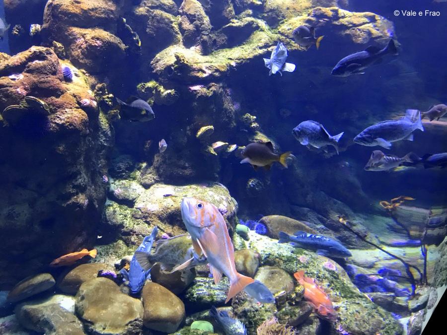 Visitare l' Accademia della Scienza a San Francisco in California pesci mondo
