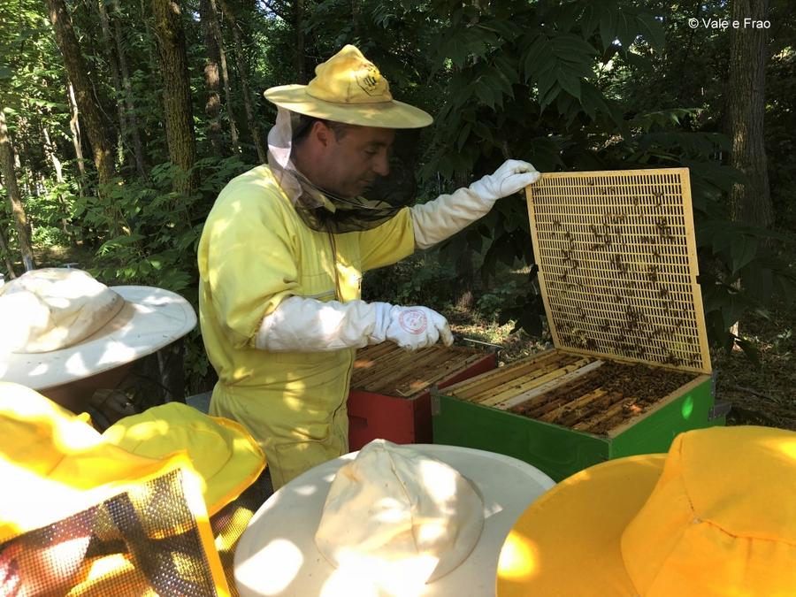 vivi la tua estate tech con valeria cagnina e francesco baldassarre 2019 summer camp api apicoltore