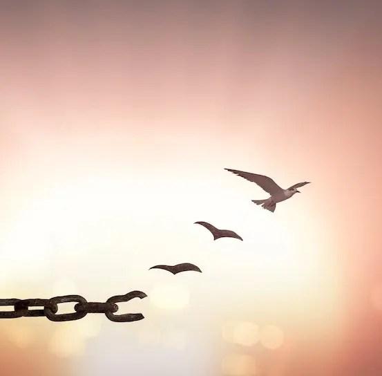 liberation oiseau dans le soleil