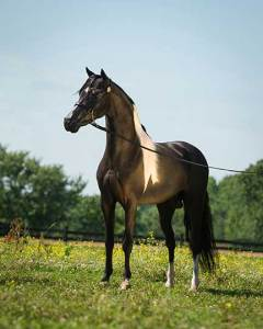 vader-chamption-stallion-mini-min