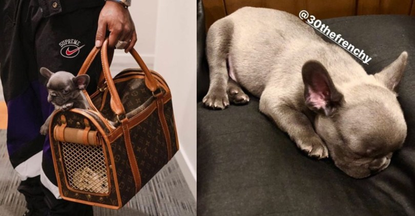 Davido Creates Instagram Account For His Pet, 30TheFrenchy