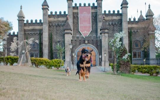 VINHEDO| Mundo mágico da Disney & Piquenique com seu Pet, são atrações do Castelo dos Vinhais no mês das crianças.