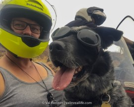 dog in sidecar - val in real life