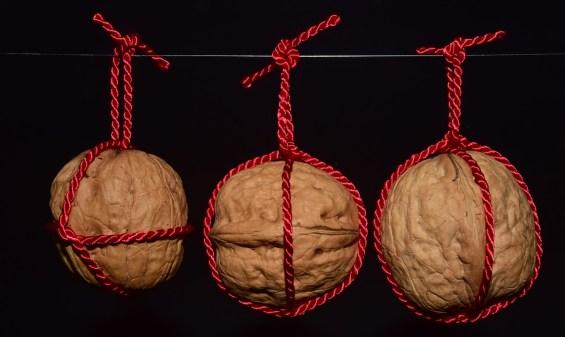 Noci appese a simboleggiare la prevenzione ai testicoli