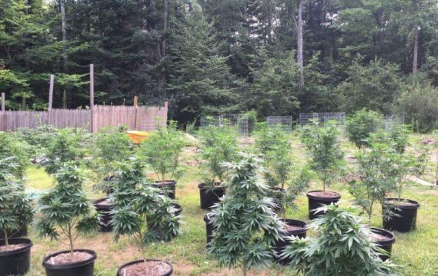 Brendan Frank outdoor plants 1024x576