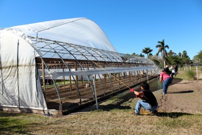A greenhouse canopy is pulled into place to complete repairs from a windstorm. (VBR)