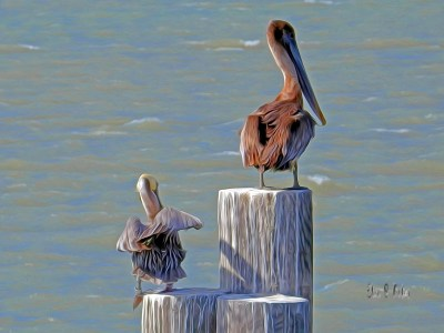 Special software gives Elisa Baker's photo of brown pelicans art effects known as sfumato. (VBR)