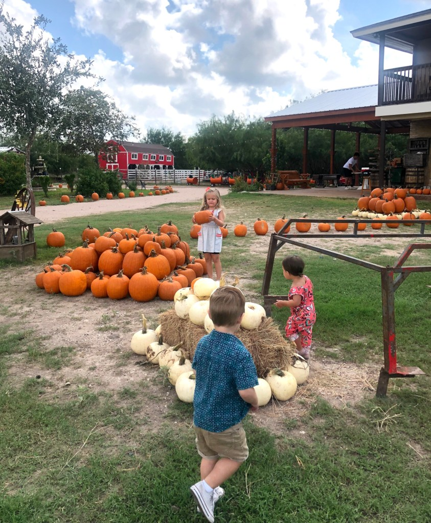 Pumpkins set up to welcome you to Maddie Pumpkin Patch.