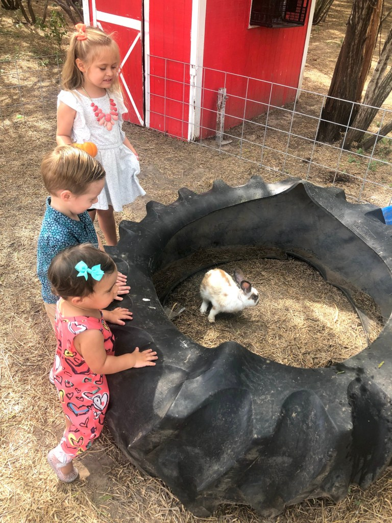 Bunnies at Maddie's Pumpkin Patch for kids to pet and play with.