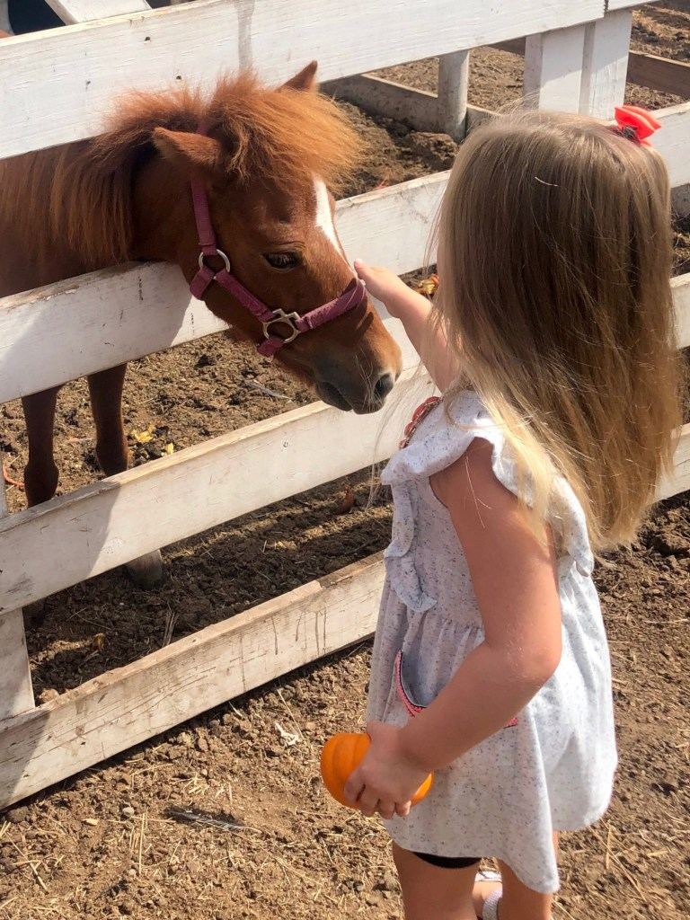 Ponies in the big red barn are sweet enough to pet at Maddie's Pumpkin Patch.