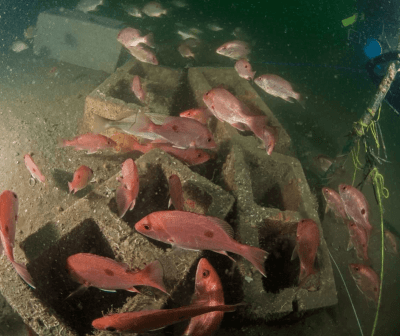 (photo RGV Reef Project)