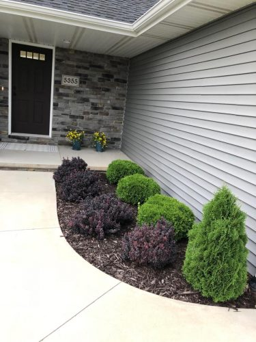 Front of House Shrubs