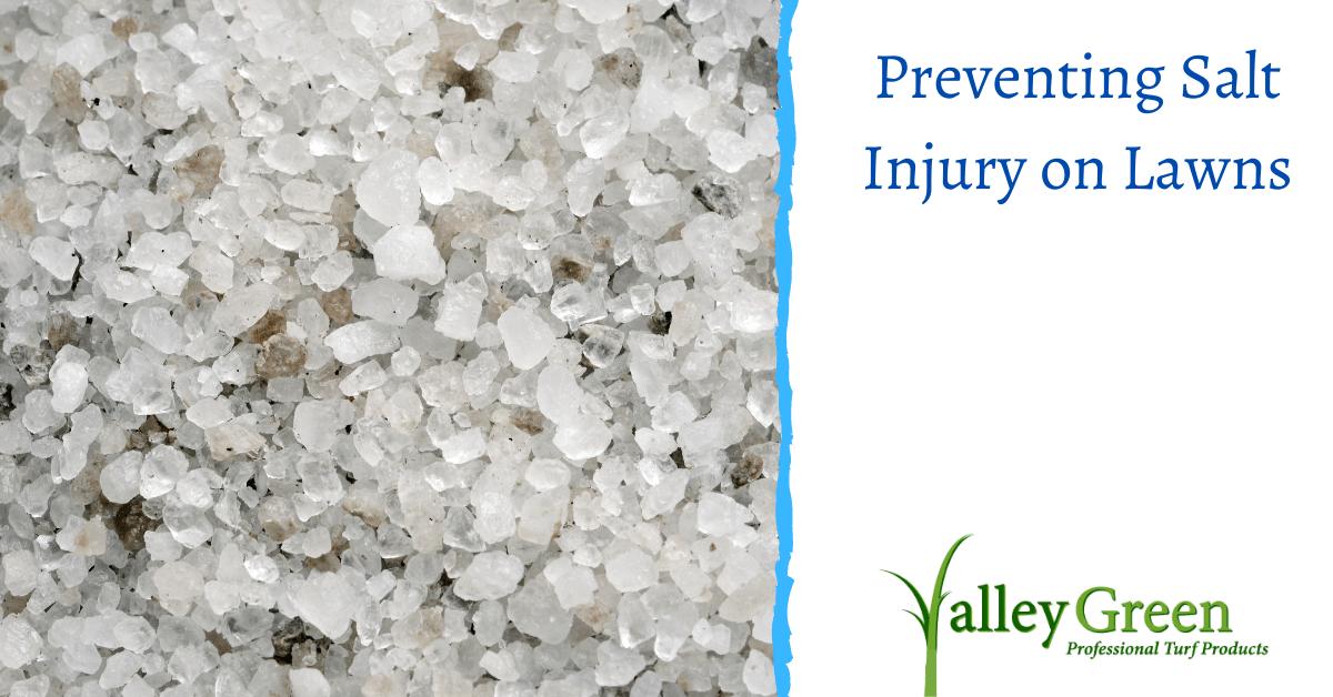 Preventing Salt Injury on Lawns