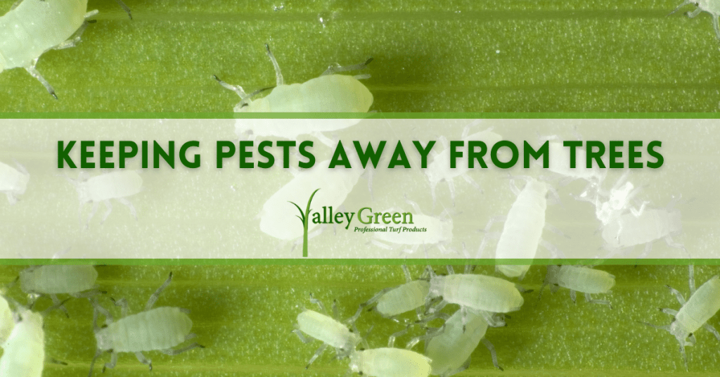 Keeping pests away from trees