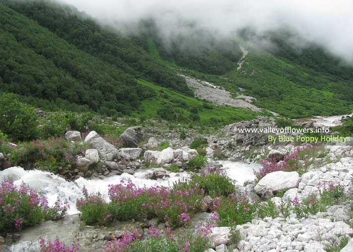 A beautiful view from deep inside the Valley of Flowers.