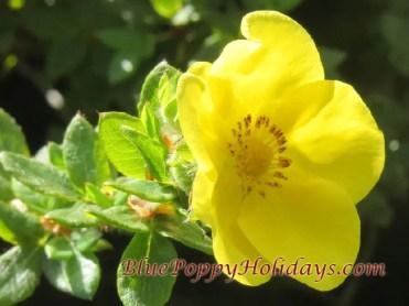 Vajardanti in valley of flowers (1)