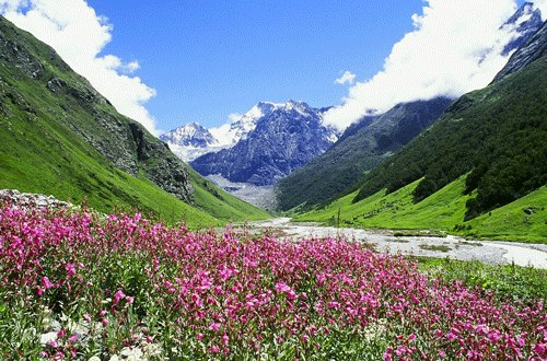 Valley of flowers in July the pink flower is Epilobium Latifolium