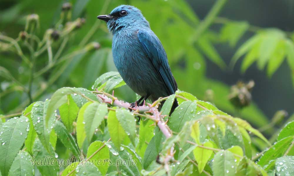 Birds found in valley of flowers National Park