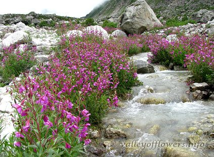 Number of days required to see valley of flowers