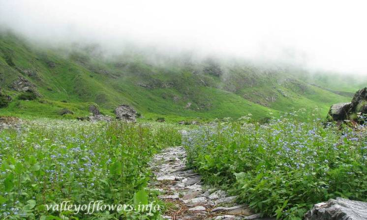 Just after the official starting point of the Valley of flowers