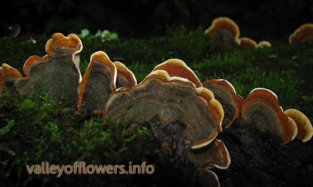 """Beautiful Mushrooms found near Valley of Flowers"" is locked  Beautiful Mushrooms found near Valley of Flowers"