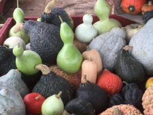 Gourds & Squash