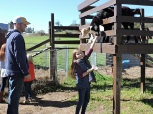 Girl Feeding Goats